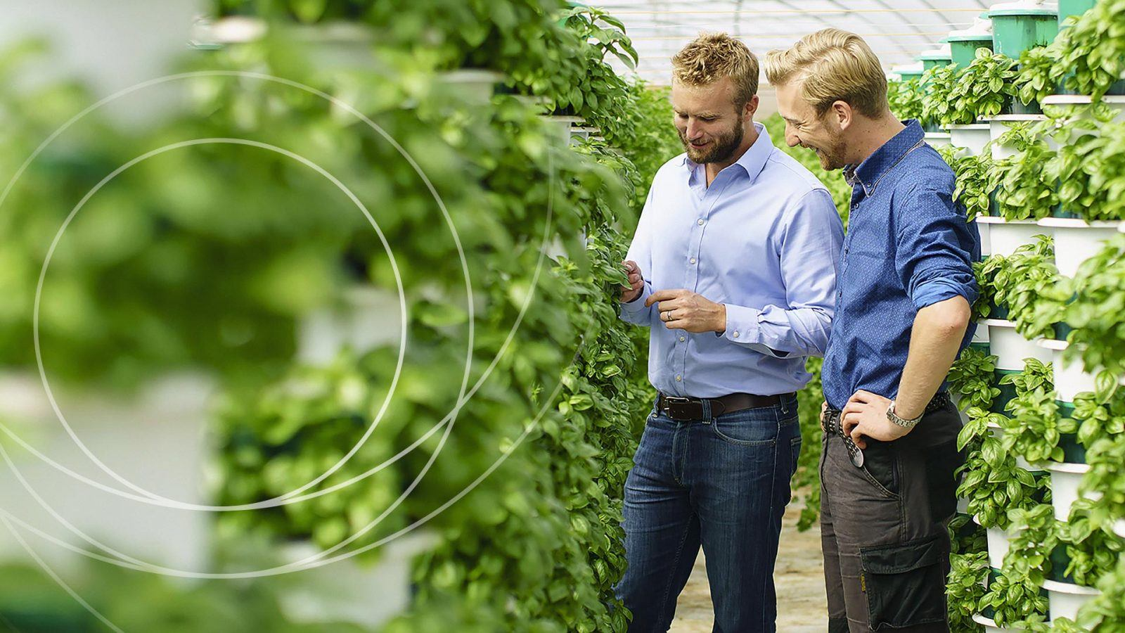 Innovate UK men in plant farm